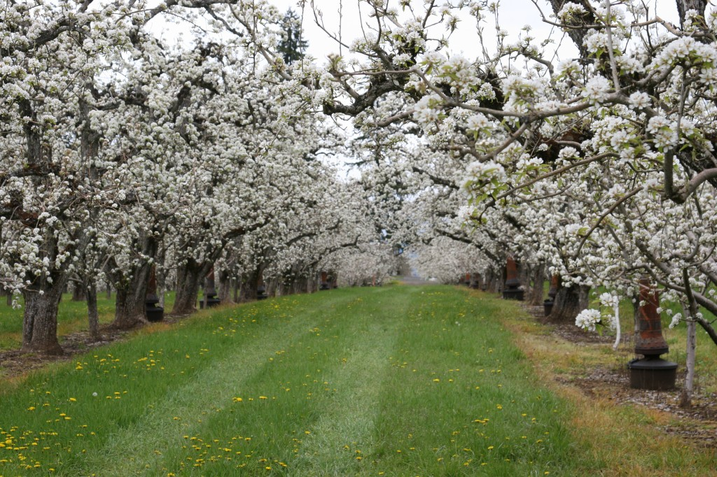 The Fruit Company, Blossom Fest, Blossom Season