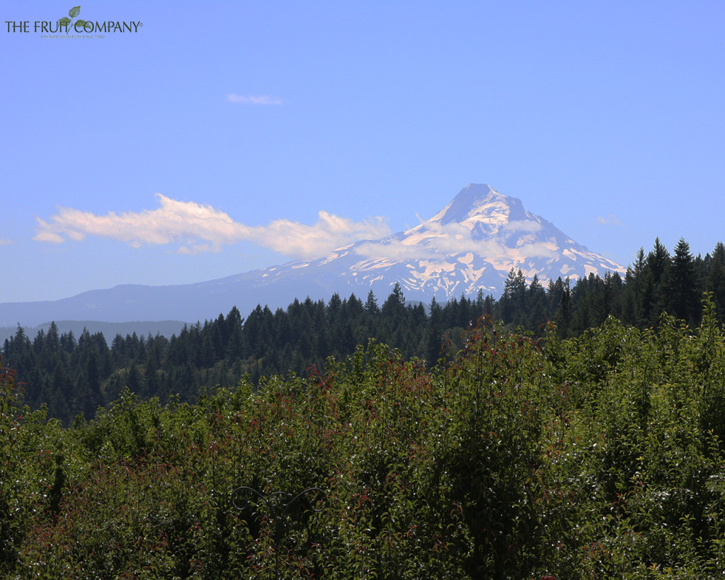 The Fruit Company, Mt. Hood, Orchards, fruit, sky,clouds, Wallpaper, Desktop, Background, Mountain, Oregon, Hood River