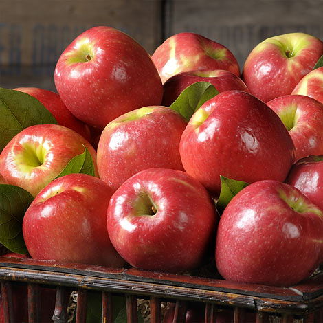 pinklady-apples-470
