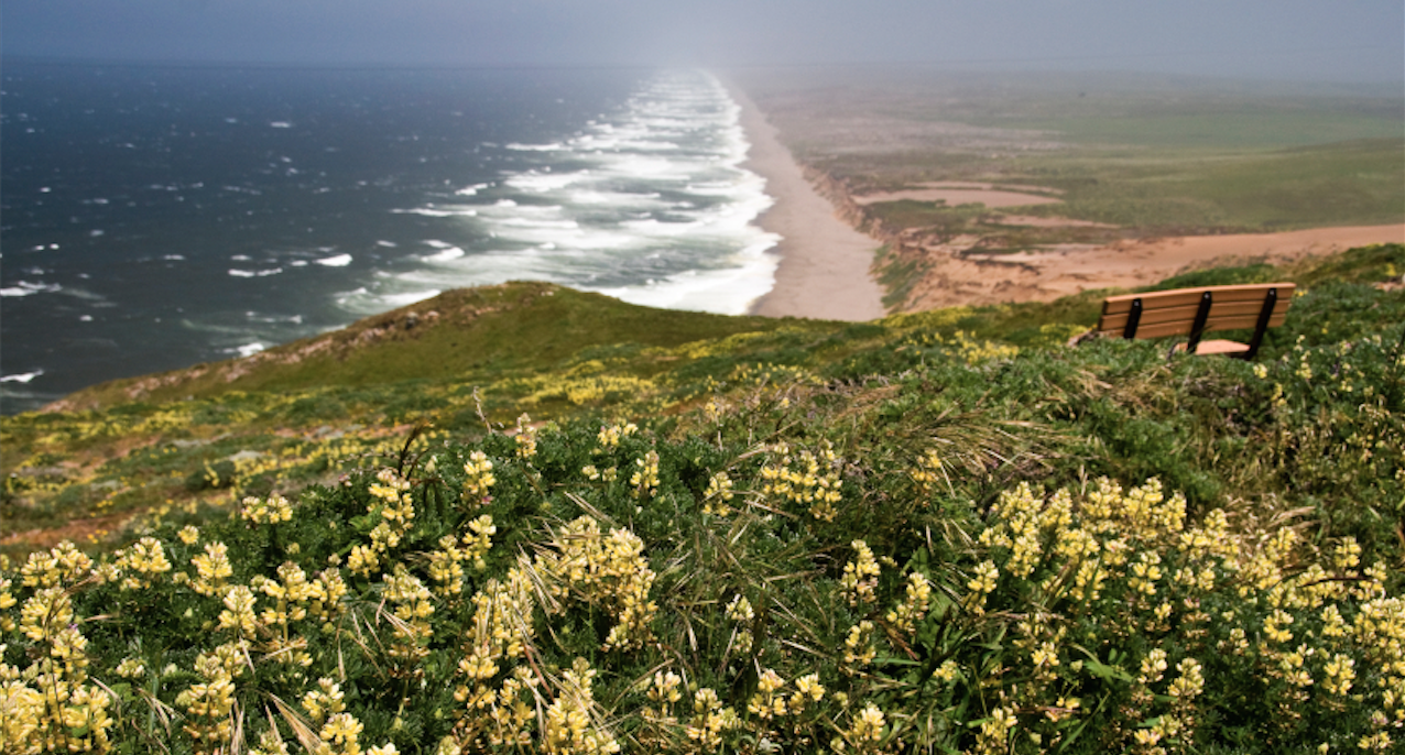 Point Reyes is a Dragonfly Cakes favorite picnic spot. From The Fruit Company Blog Meet our Makers Series