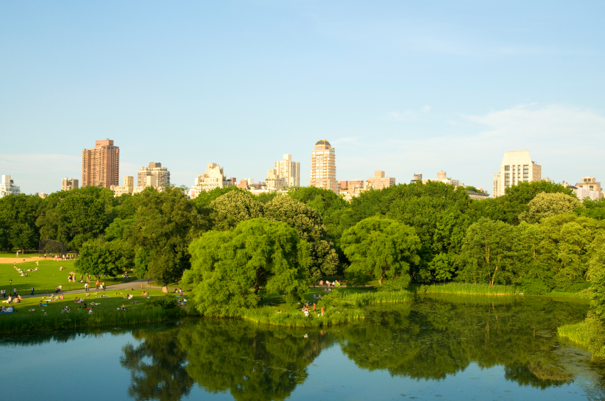 Field Trip Picnic Spot Central Park New York | The Fruit Company Meet our Maker Series