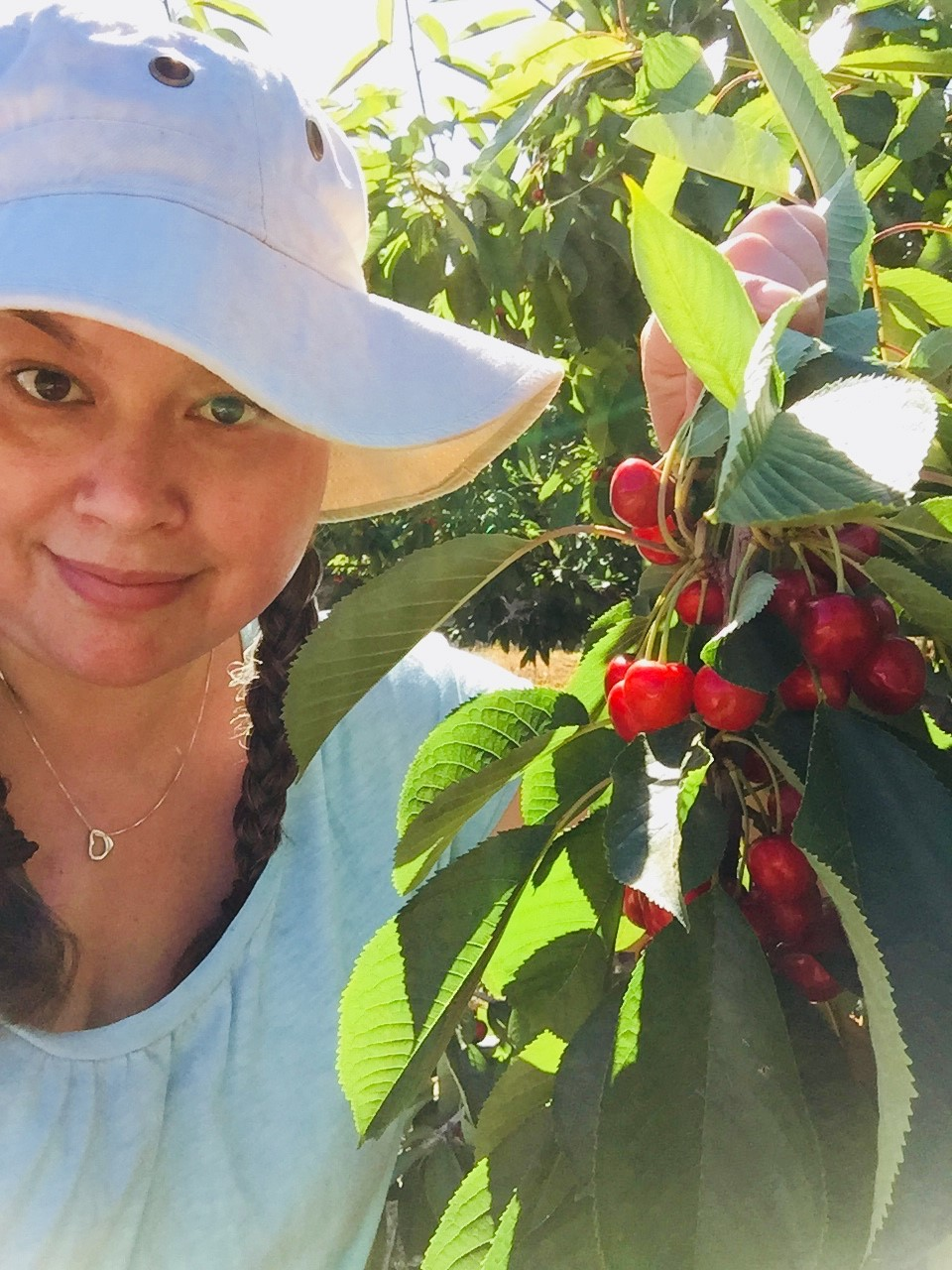 Amber Cherry Orchard