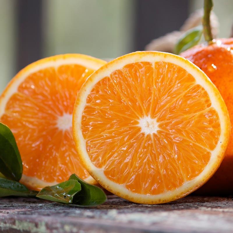 January Fruit of the Month: Malibu Navel Oranges