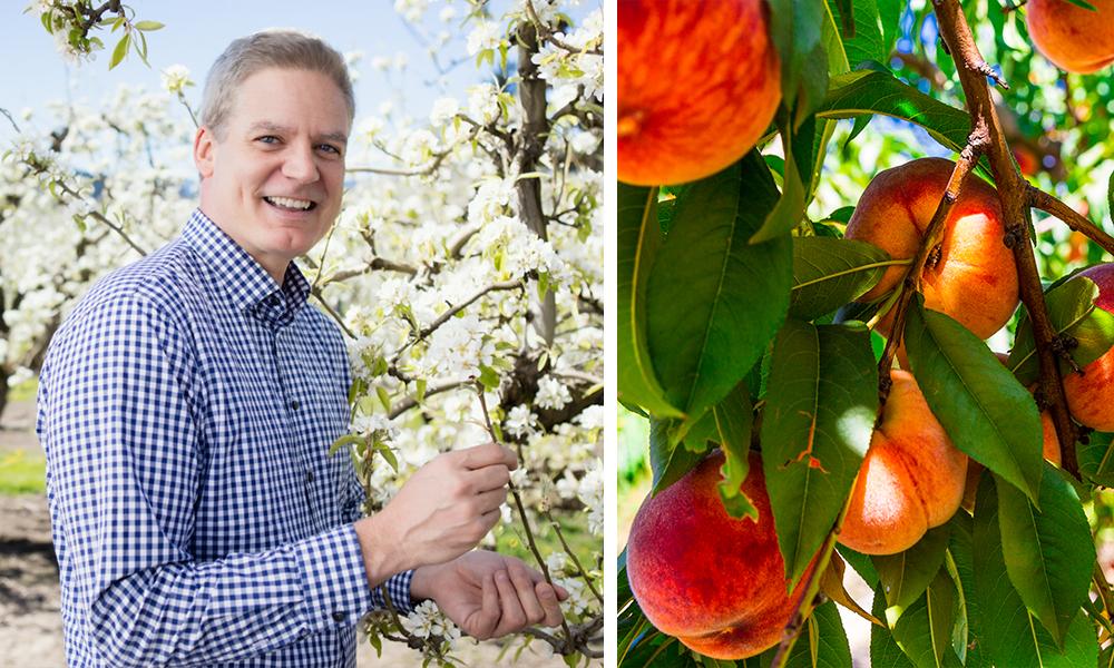Scott's Tips Peaches and Nectarines